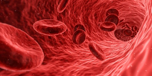 Blood cells benefiting from extra virgin olive oil